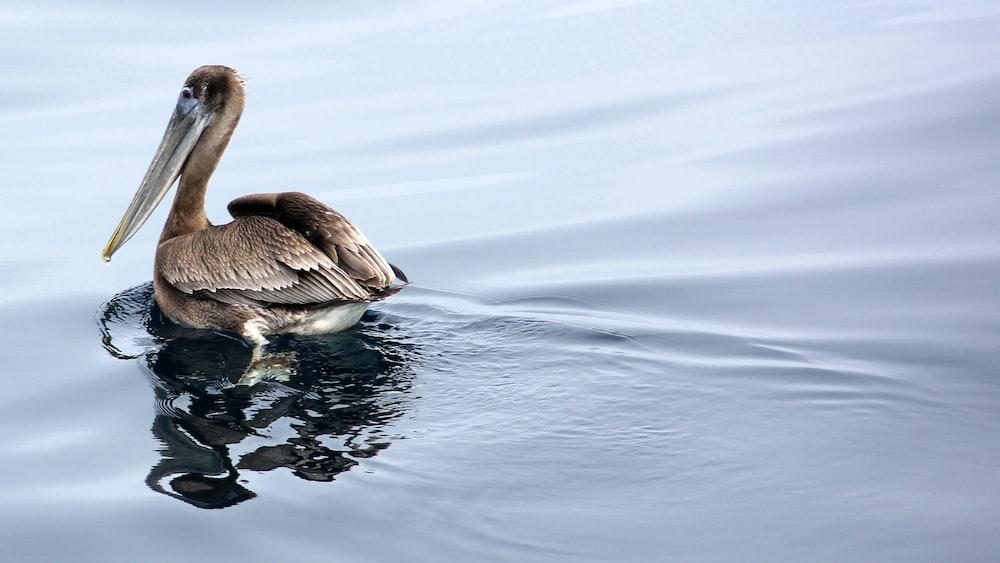 brown bird in body of water during daytime