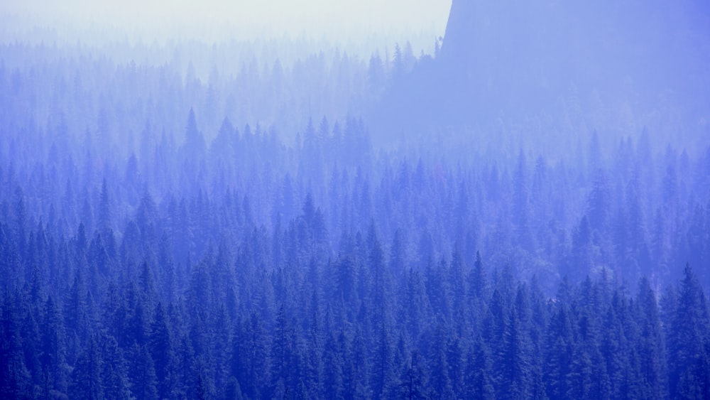 mountain with trees covered with fogs