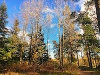 bare trees under blue sky