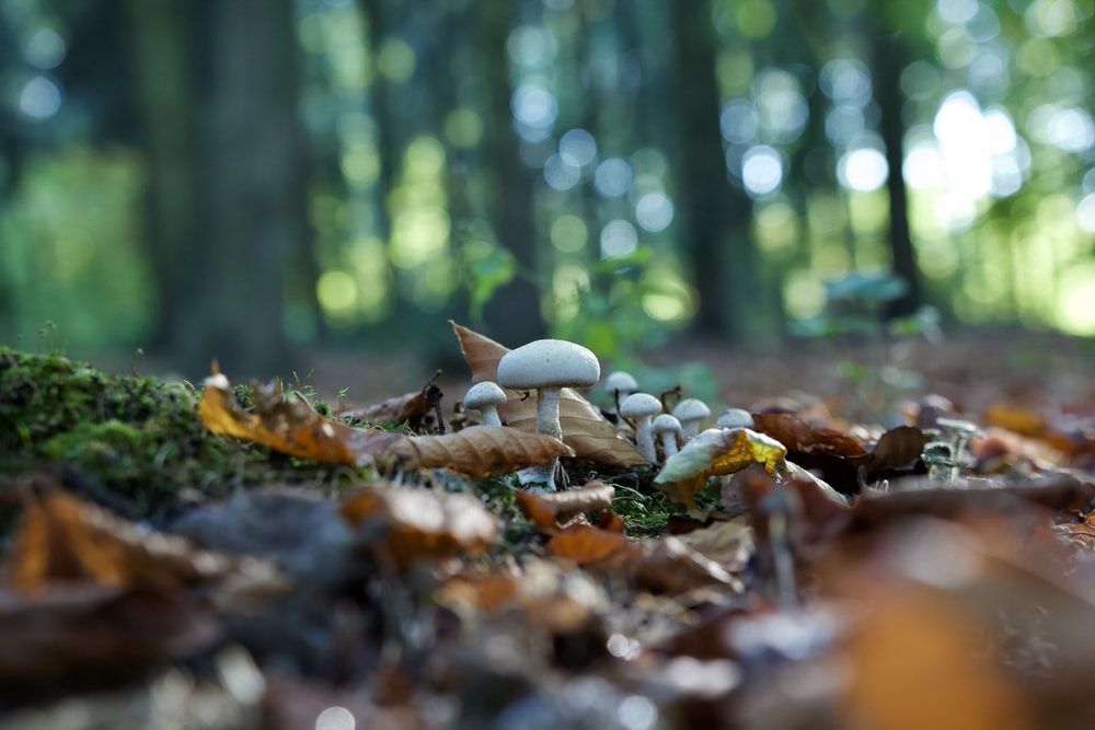 mushrooms on ground surrounded with leaves during daytime