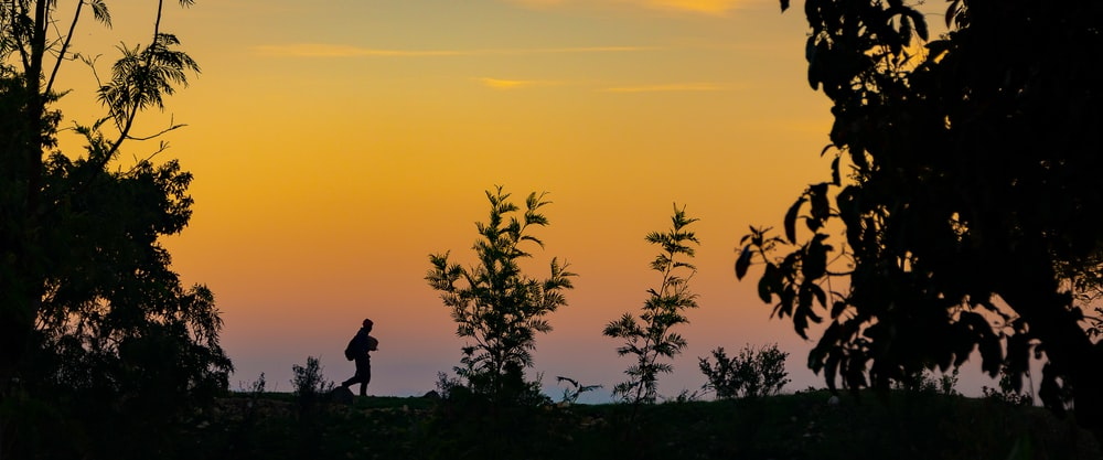 silhouette of person and trees during golden hour