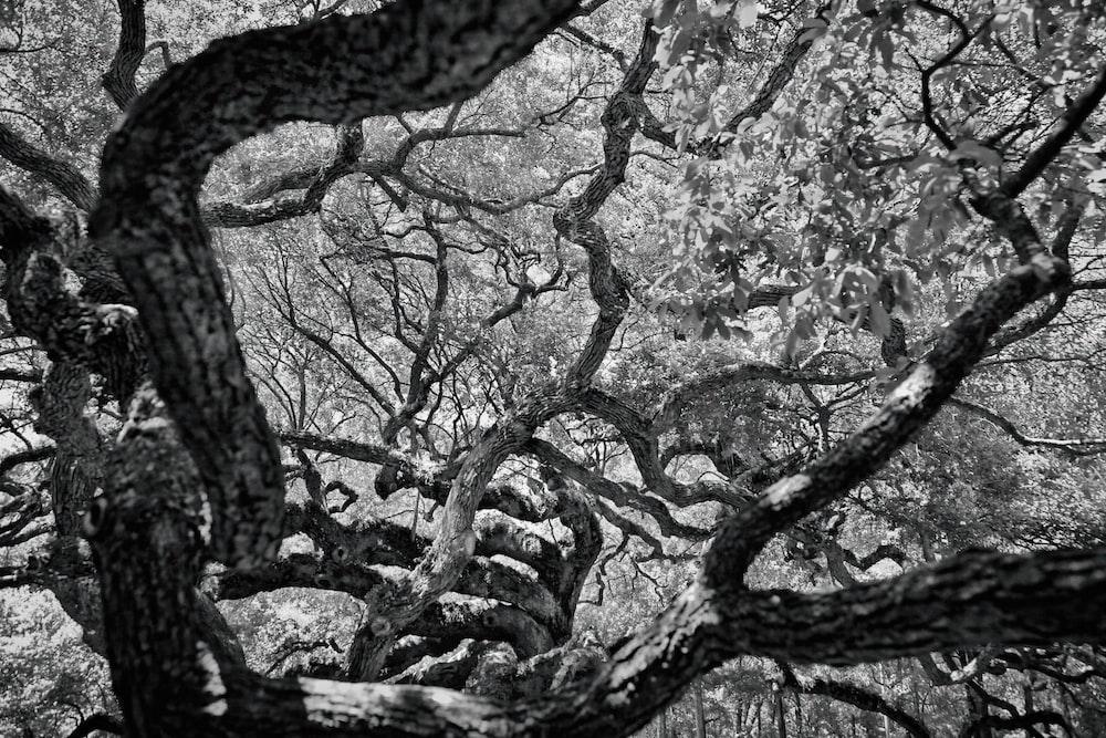 black tree branch