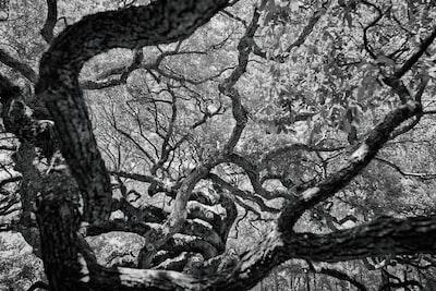 black tree branch south carolina zoom background