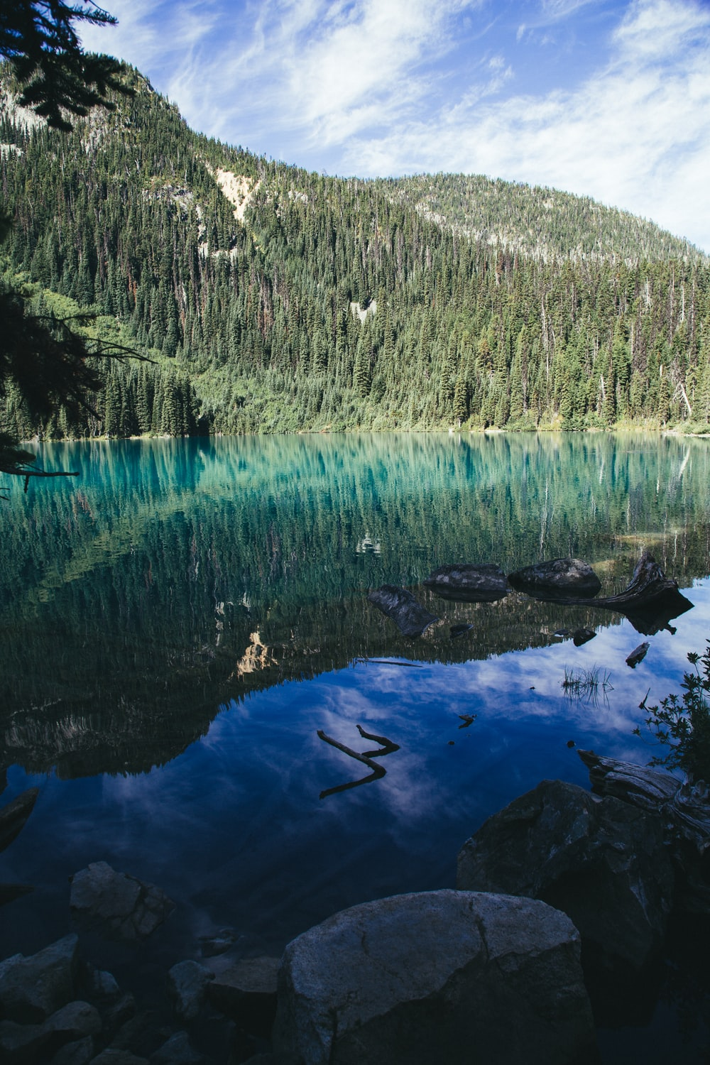 nature photography of pine trees surrounding body of water during daytime