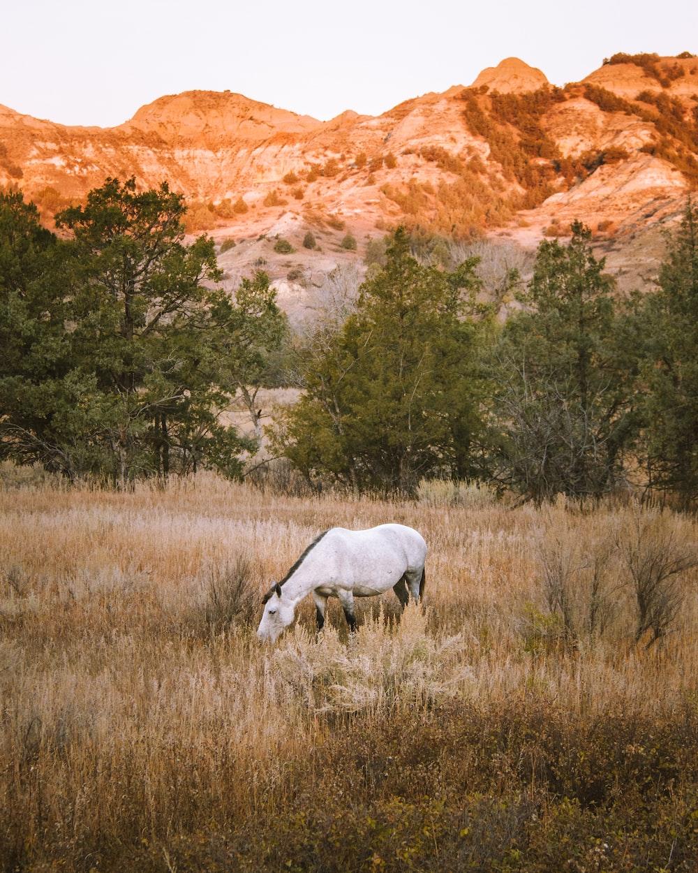 white horse near trees
