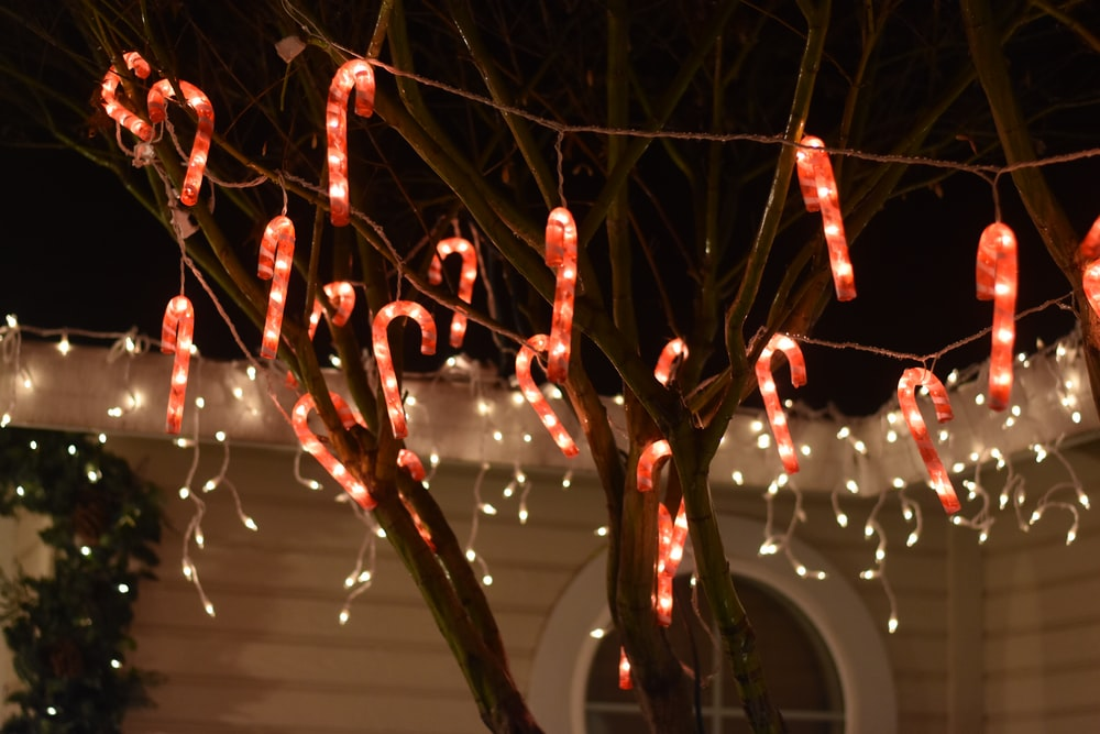 Red And White Candy Canes String Lights On Tree At Nighttime