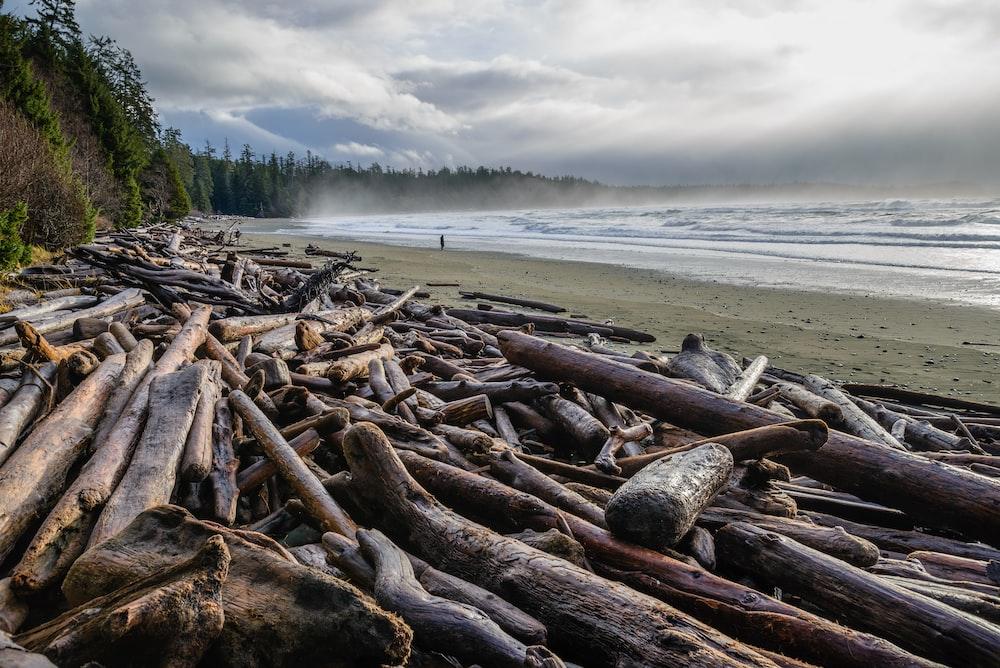 pile of driftwoods near shore