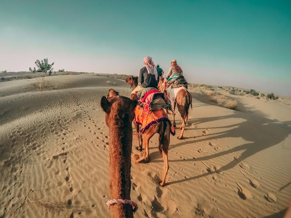 four people on their respective camels
