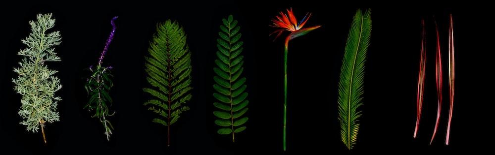 seven assorted-color leaf clip art