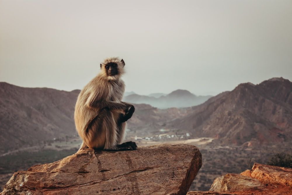 monkey on rock