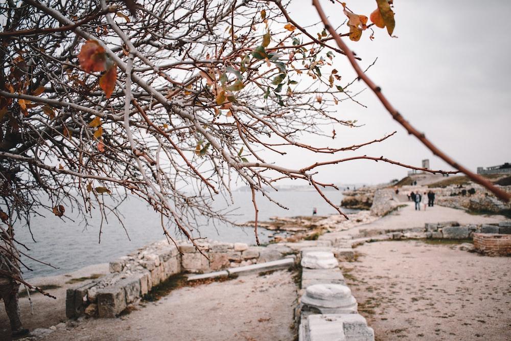 leafless tree near sea