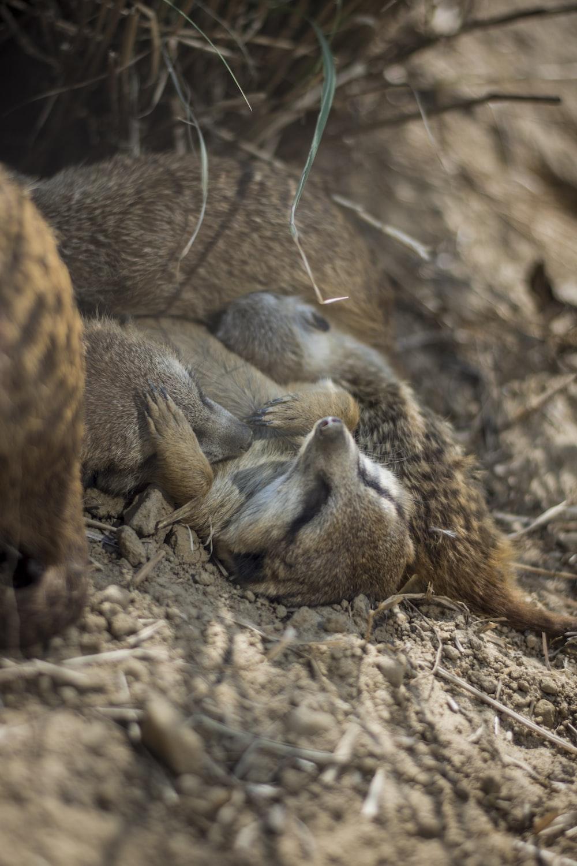 pet lying on soil