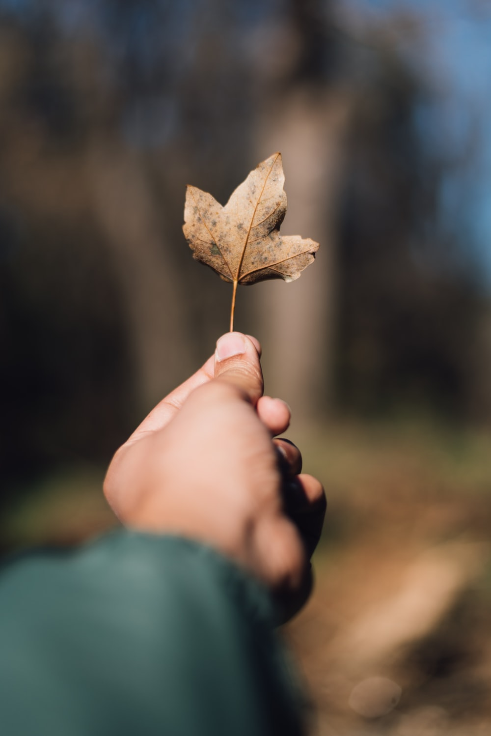 person holding brown fall leaf