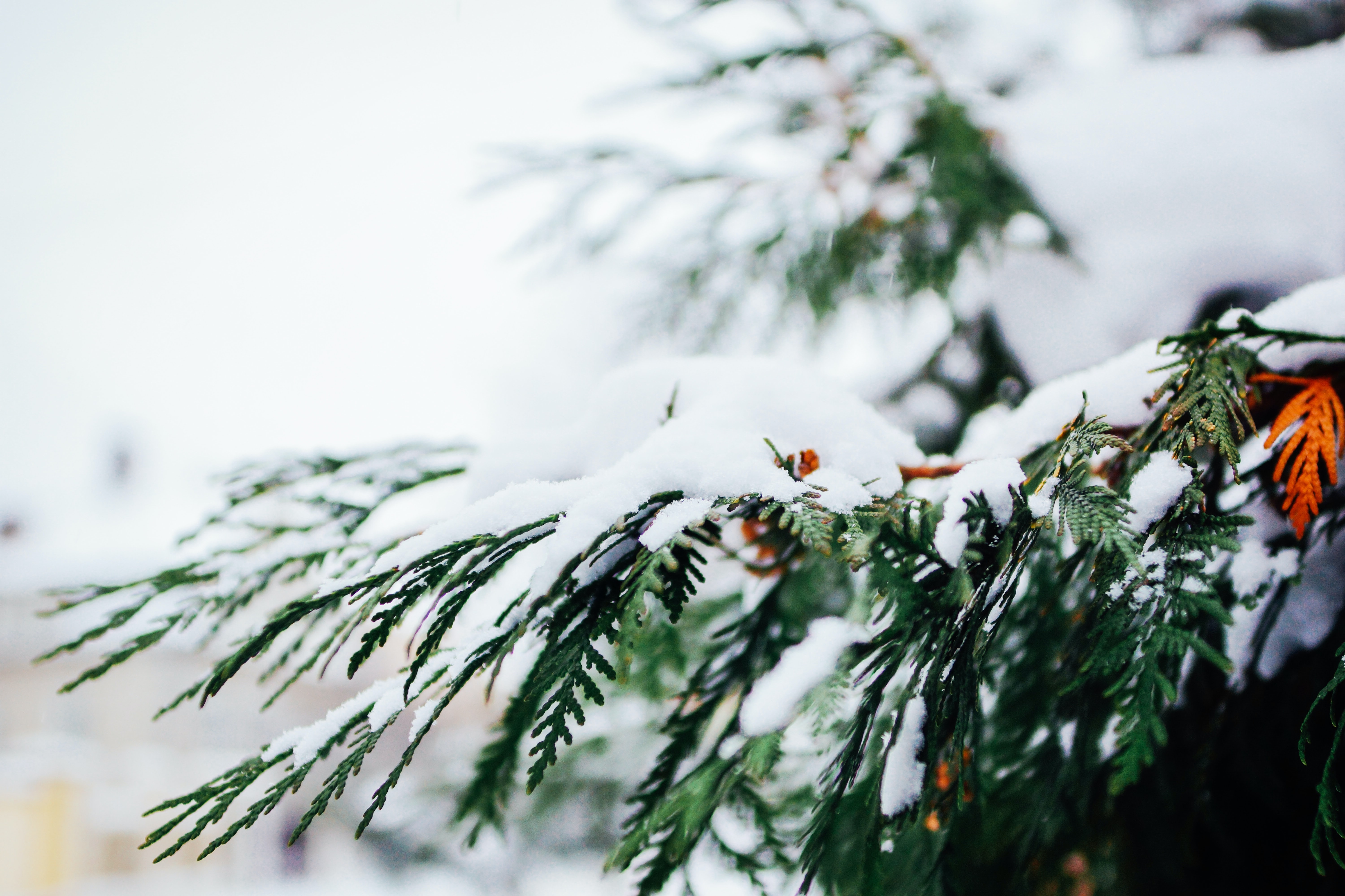 selective focus photography of snow on pine trees during daytime