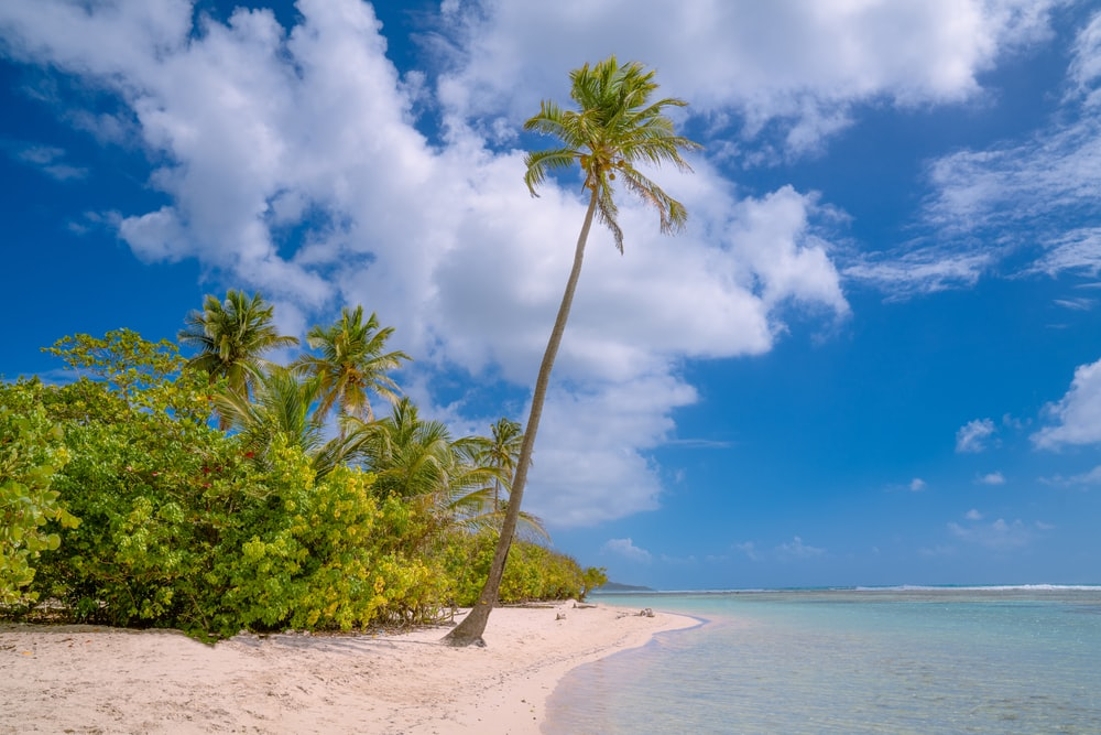 green palm tree on shore during daytime