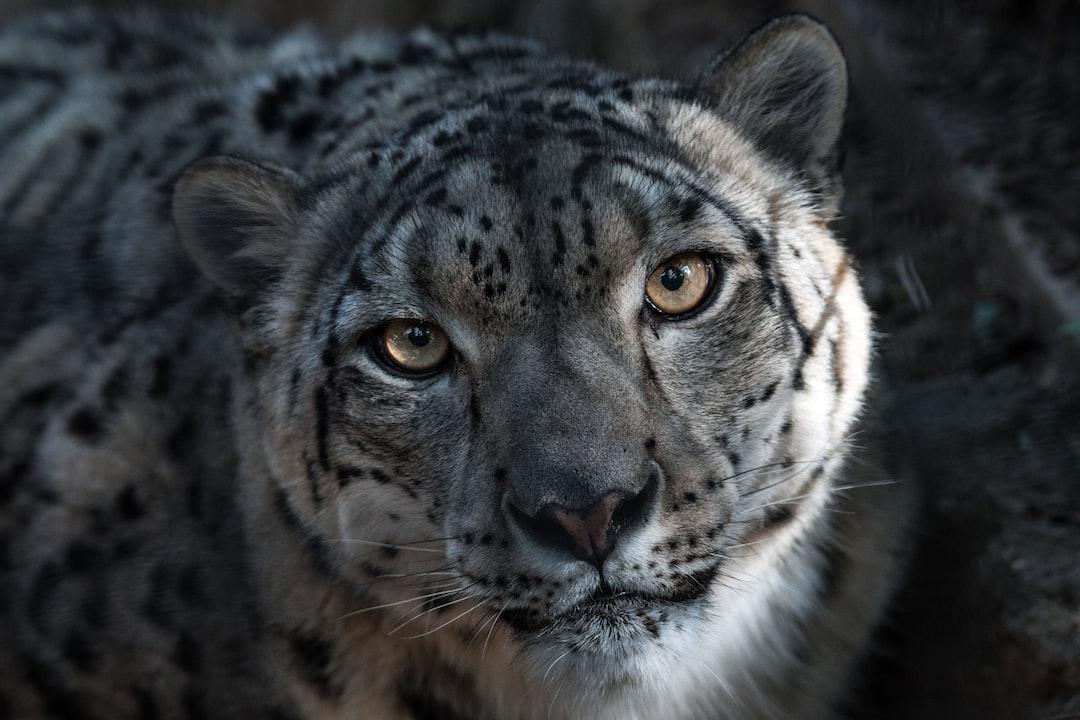 Snow Leopard  $PATH