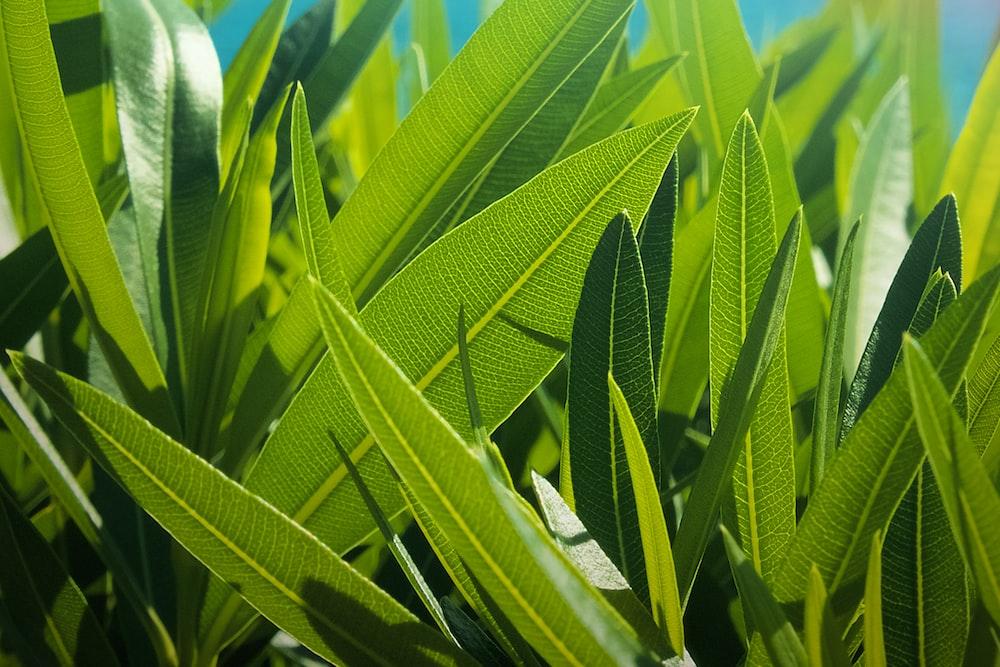 green sword leaf during daytime