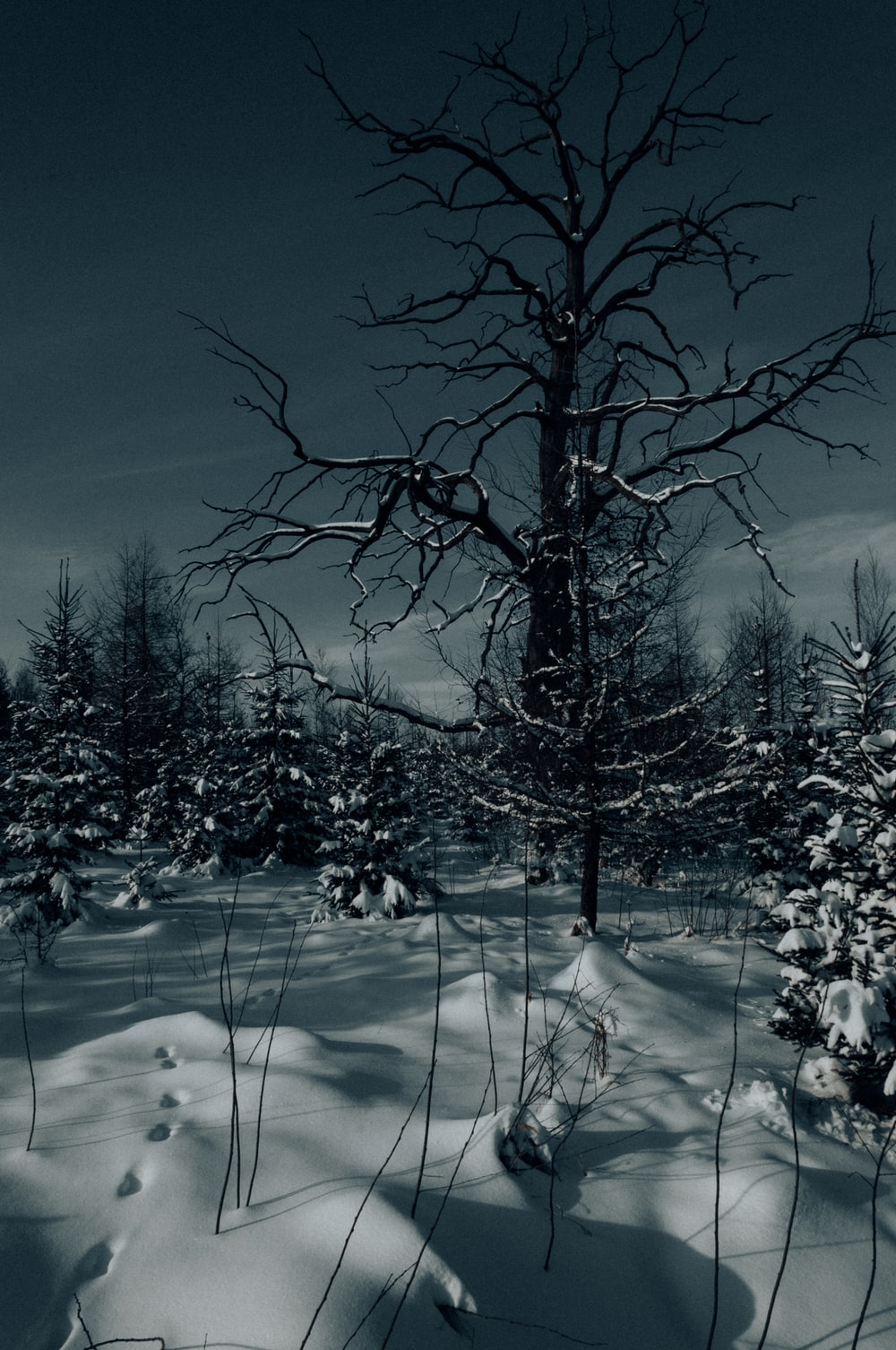 trees and snowfield
