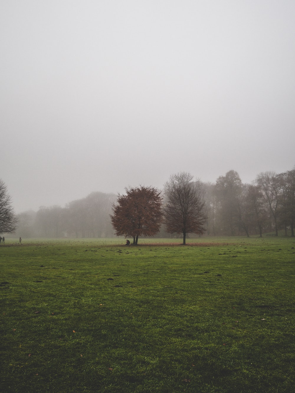 trees and grass field