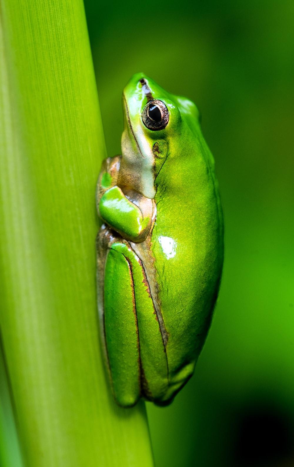 macro photo of green frog