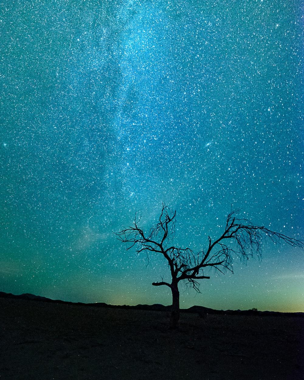 bare tree under starry night