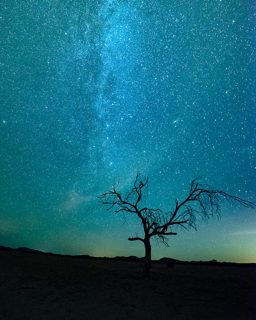 bare tree under starry night