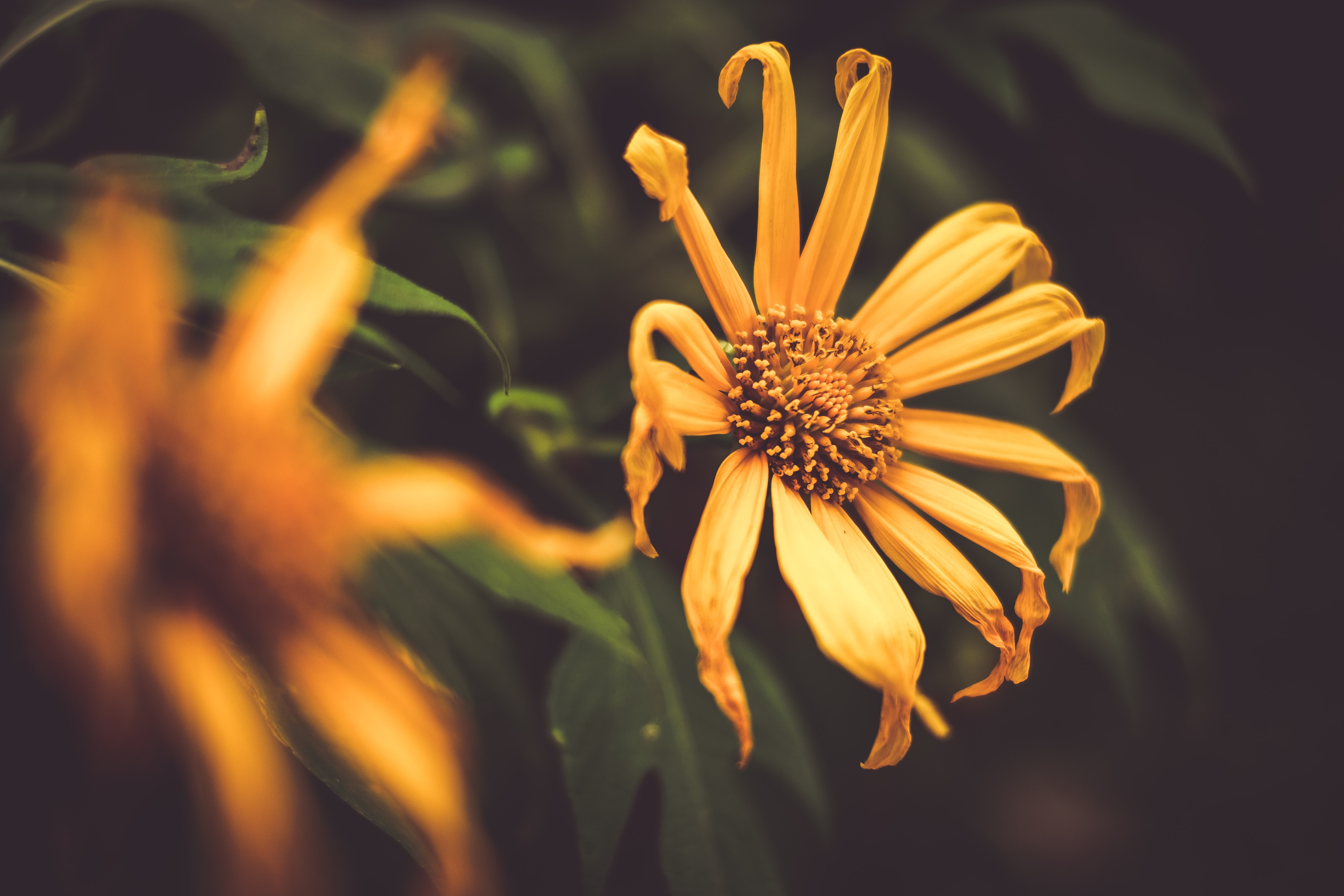 orange petaled flower in selective focus photography