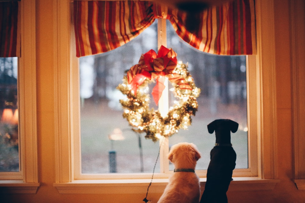 two dogs standing in front of window