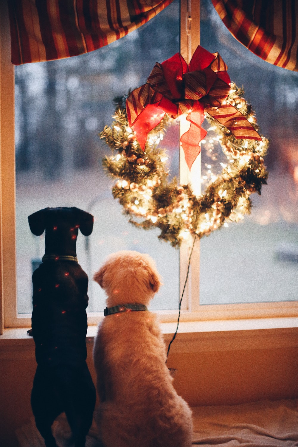 two black and white dogs near lighted wreath
