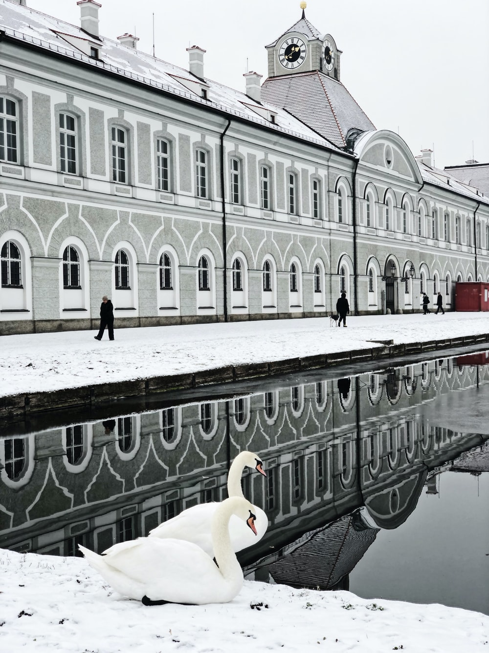 two white swans across body of water