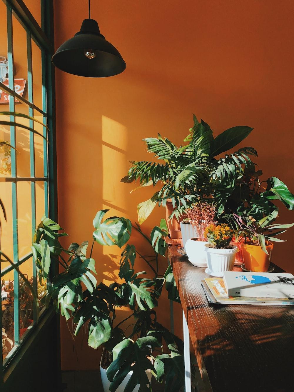 green-leafed plants beside table inside room