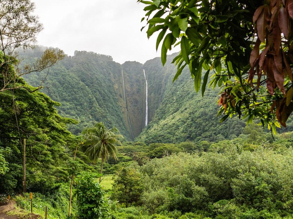 green trees near waterfalls