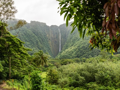 green trees near waterfalls hawaii zoom background