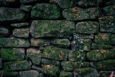 brown vines on stacked stone blocks