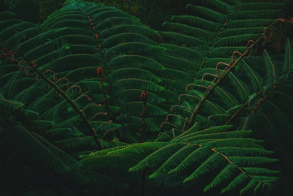 close-up photography of sago palm