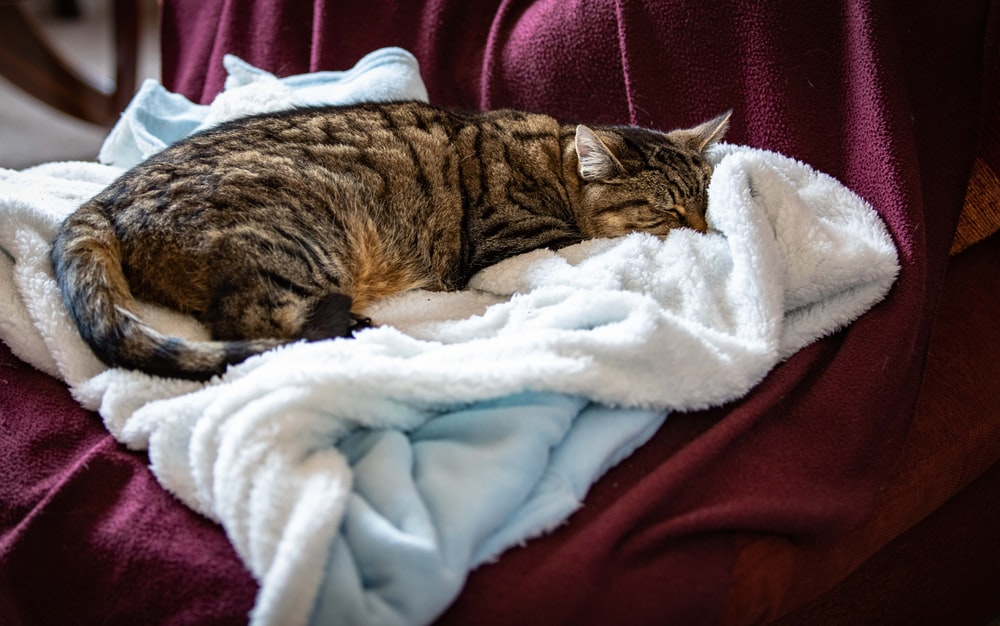 brown tabby cat on textile