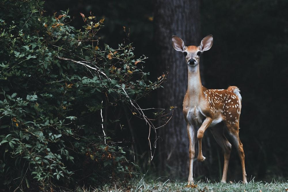 brown deer beside plants