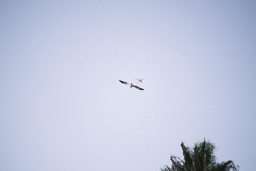white bird flying on sky during daytime