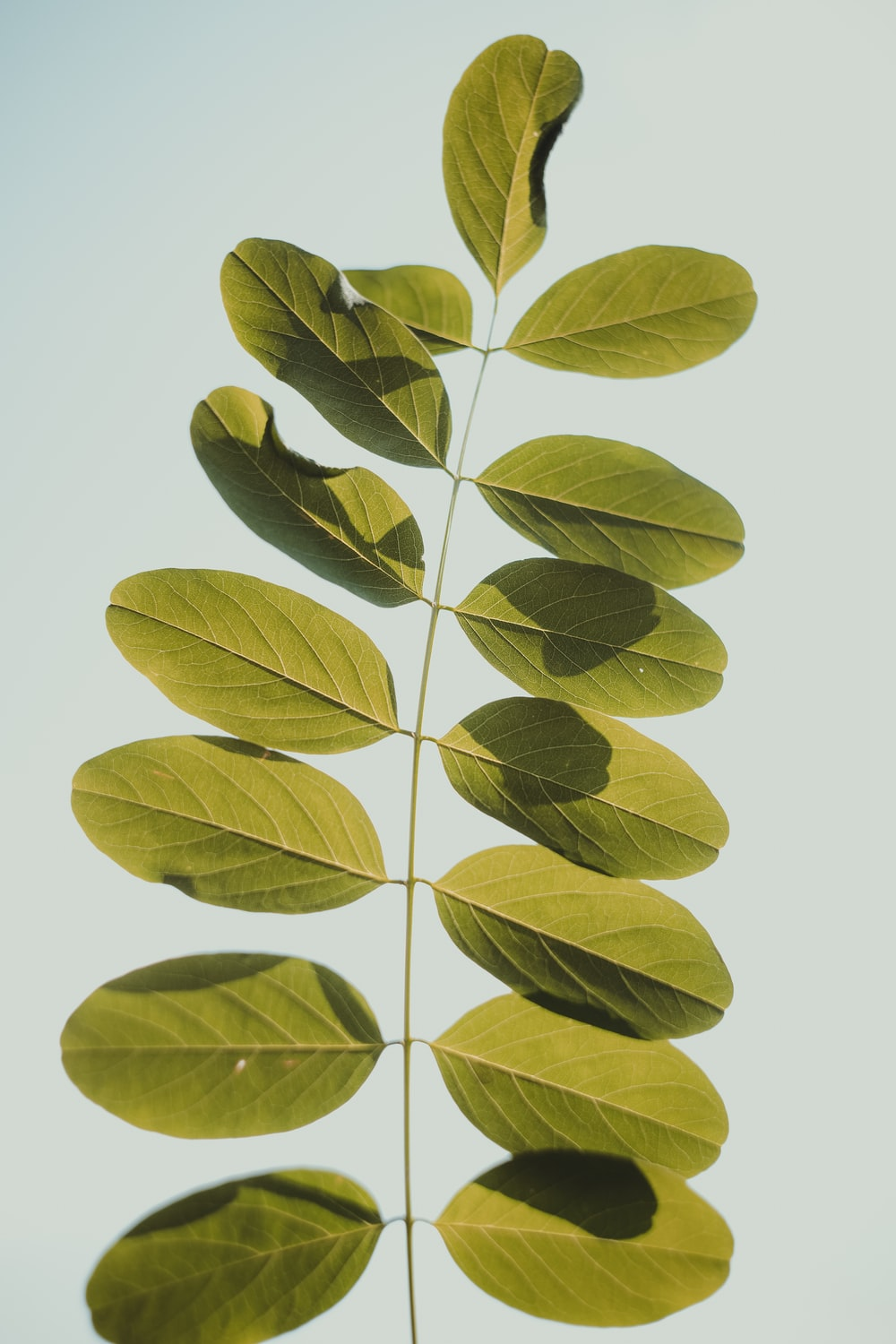 green-leafed plant