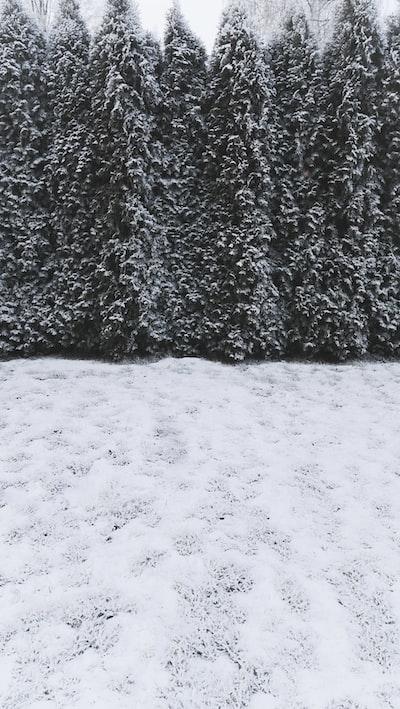 A frosty morning in my backyard.