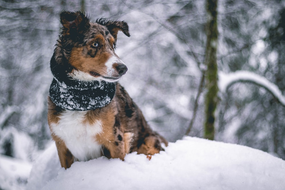 brown, black, and white puppy standing on snow