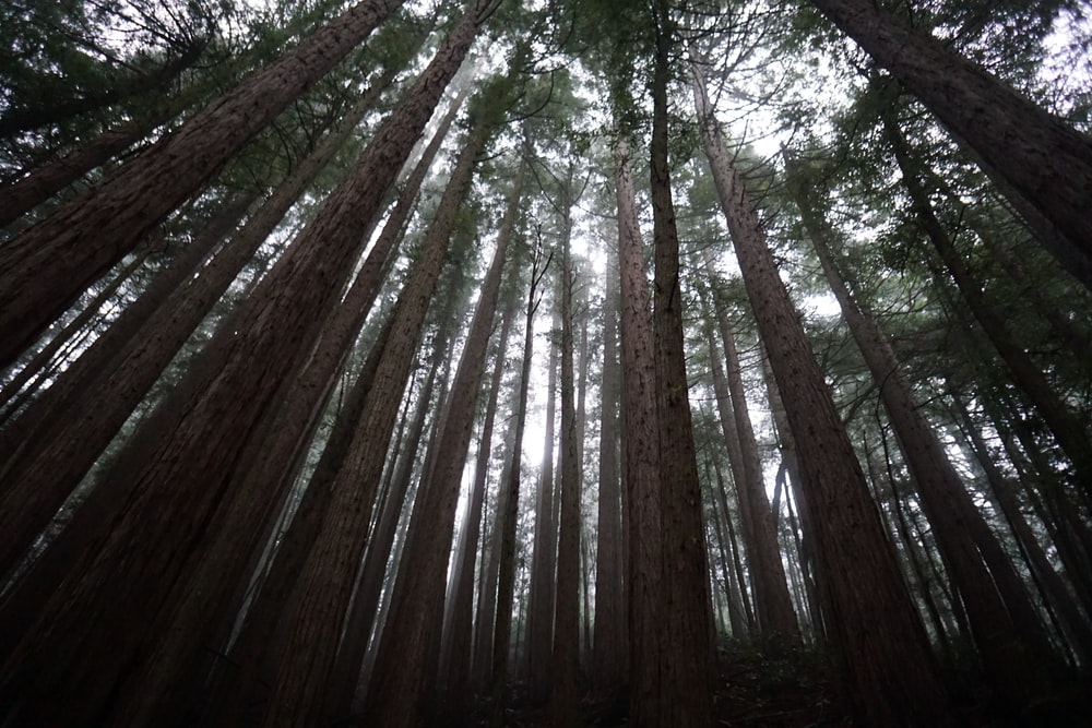 low angle view forest trees