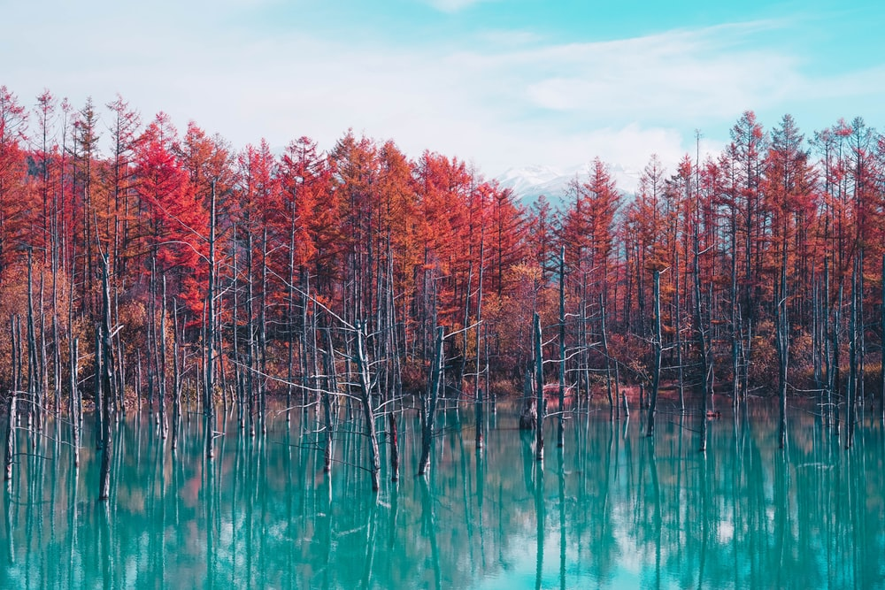 red trees and body of water view