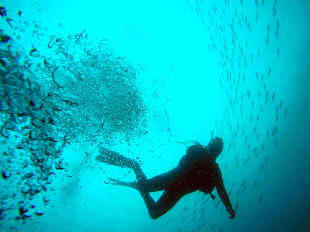 black diver photo