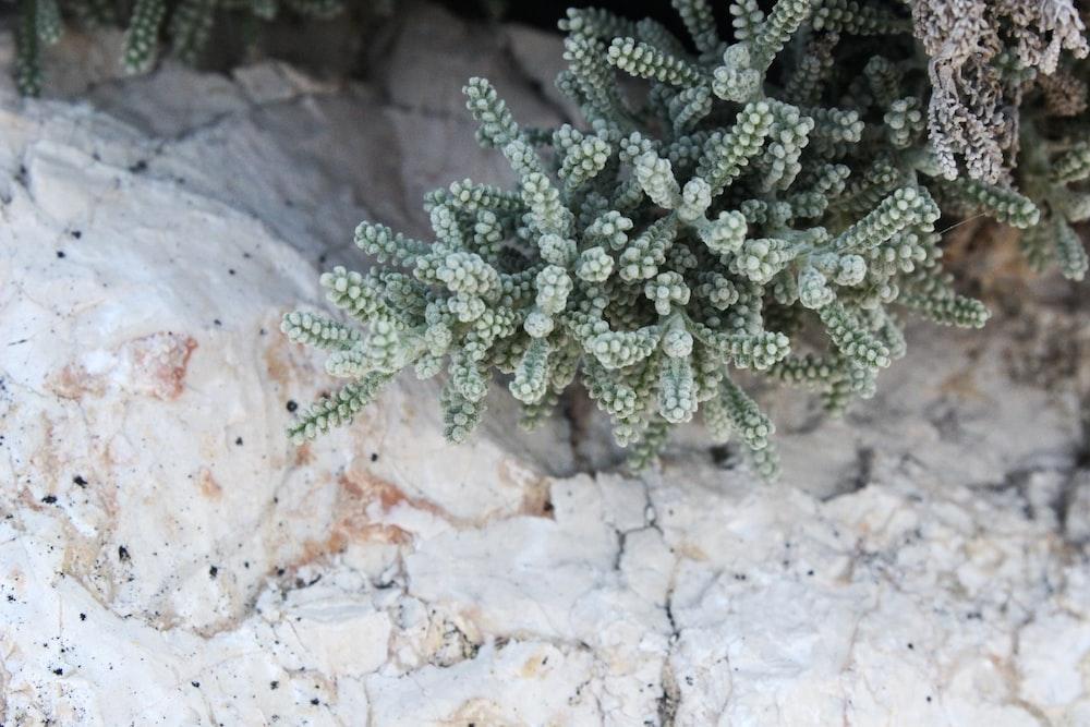 green-leaf plant