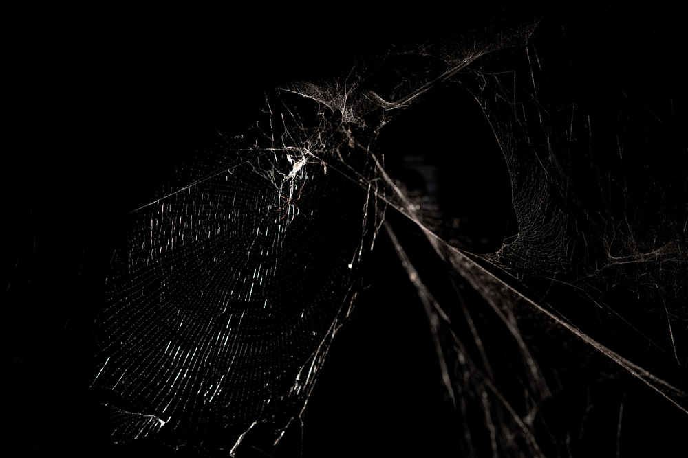 grayscale photography of spider web