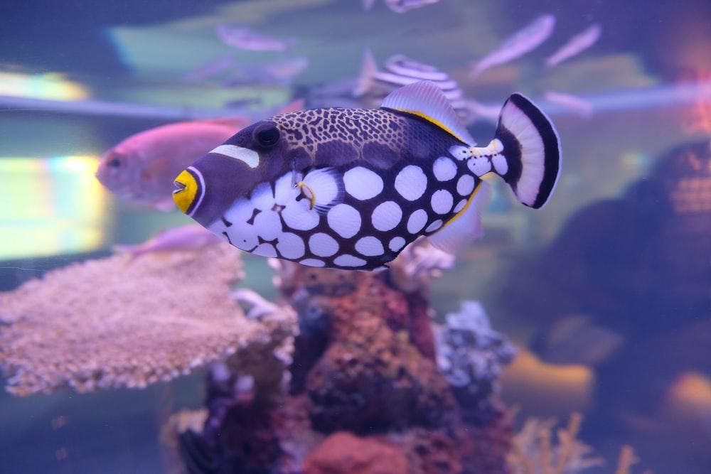 white, blue, and yellow fish