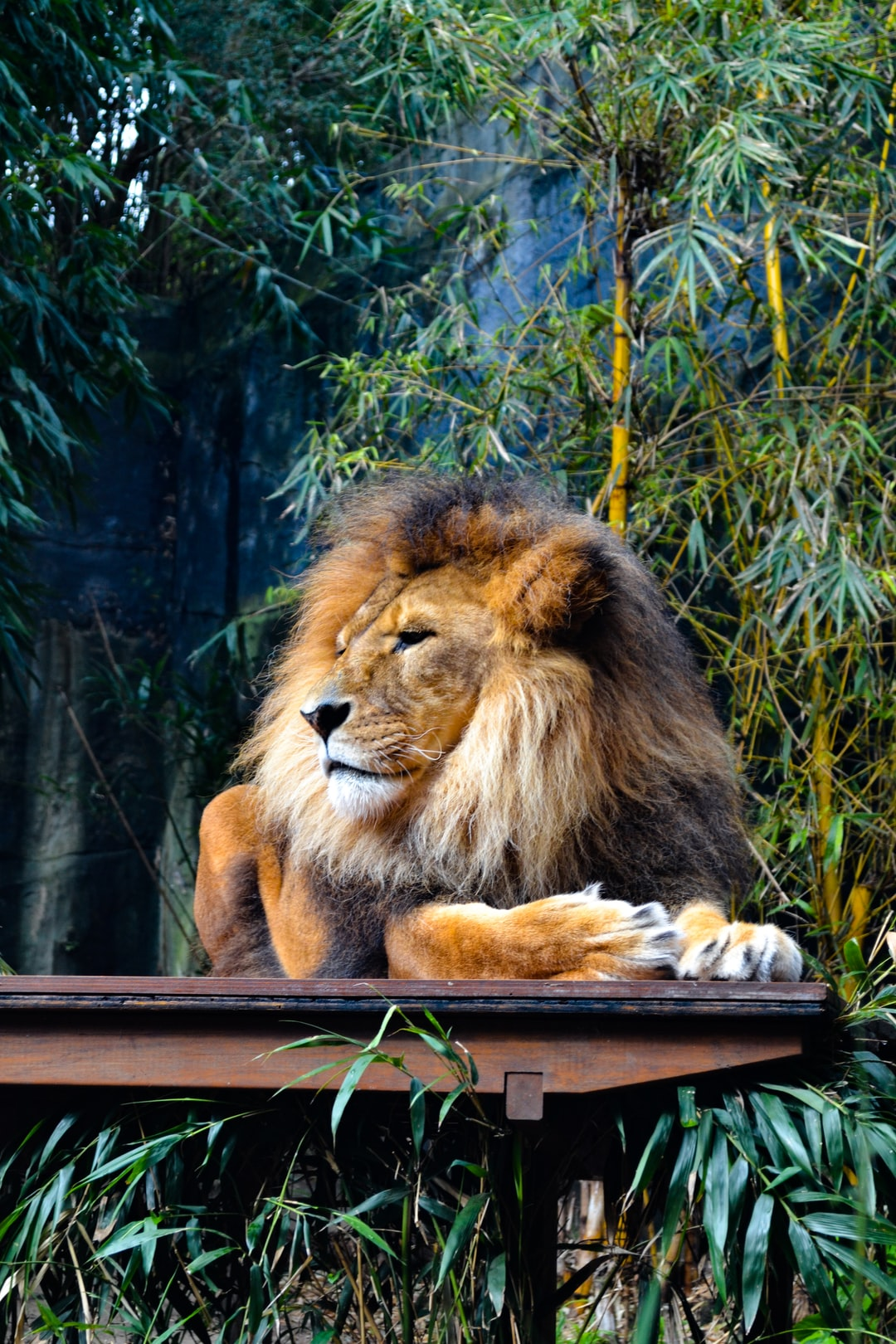 Get Inspired For Hd 1080p Full Screen 4k Ultra Hd Lion Wallpaper Images