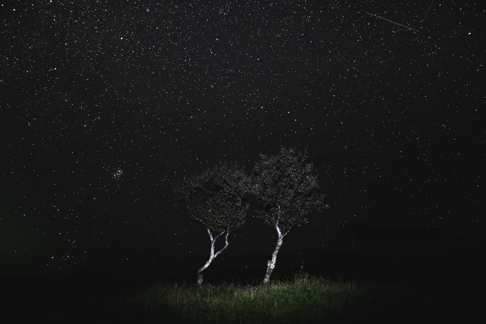 tree during starry night