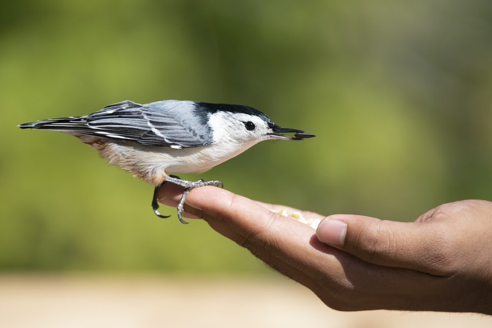 white and grey bird perching on person's hand